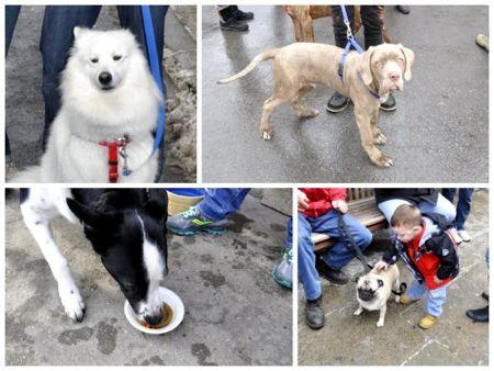 dogs.jpg.jpg