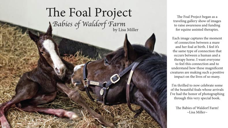 Foal Project book
