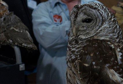raptor-fest-owl.jpg