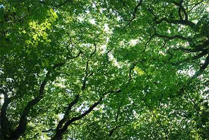 trees-dec.jpg