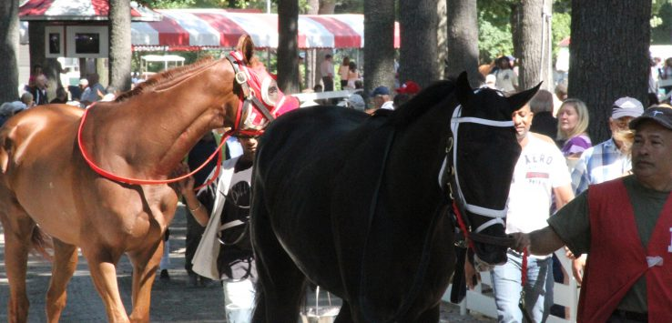 horses at saratoga race track