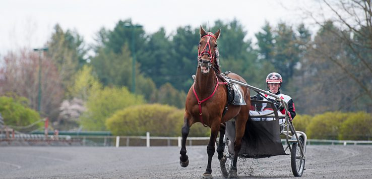 saratoga casino hotel harness track