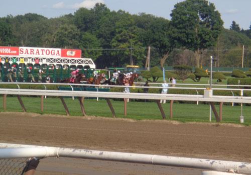 race course horses