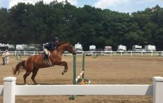 Horse jumping over hurdle