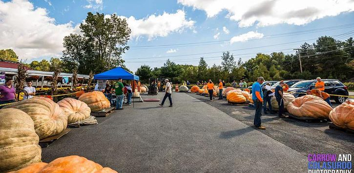 big pumpkins in a parking lot