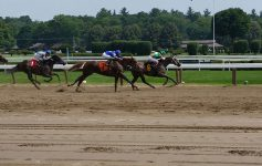 horses on a race track