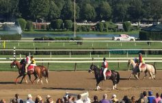 horses on a racetrack