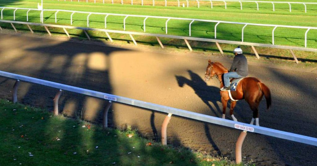 horse on a track