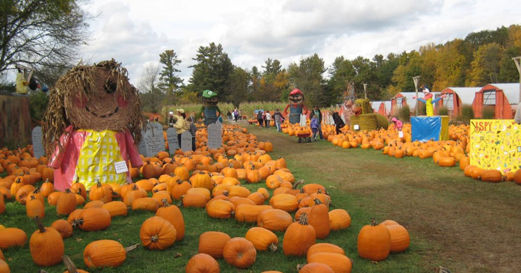 pumpkin patch and fall displays