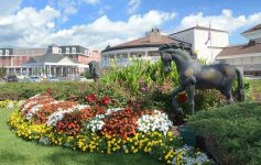 flowers and horse statues outside the saratoga casino hotel