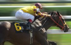 a horse and jockey racing