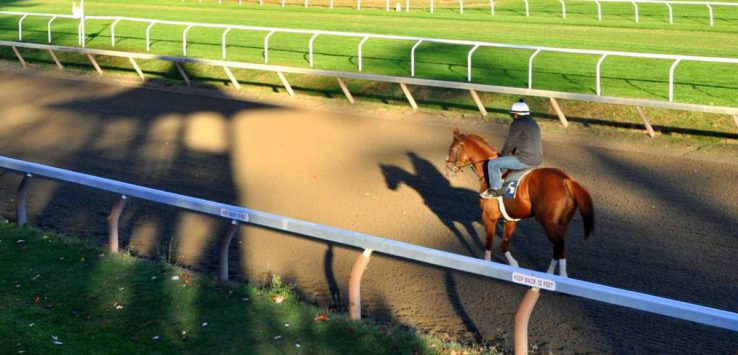 a rider on a horse on a training track