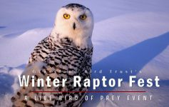Winter Raptor Fest photo