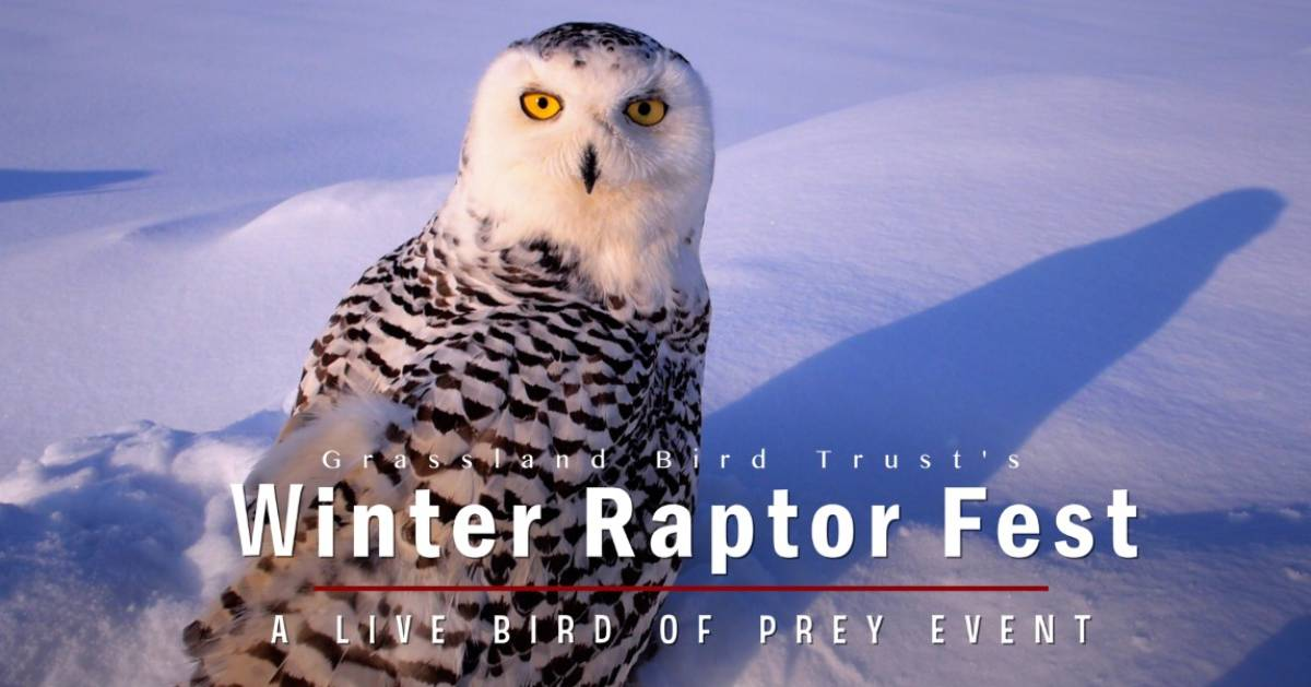 Winter Raptor Fest photo