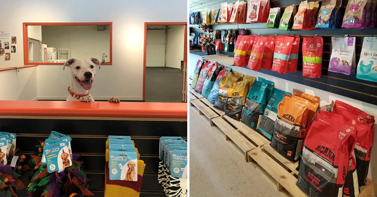dog behind a store counter and shelves full of dog food and treats