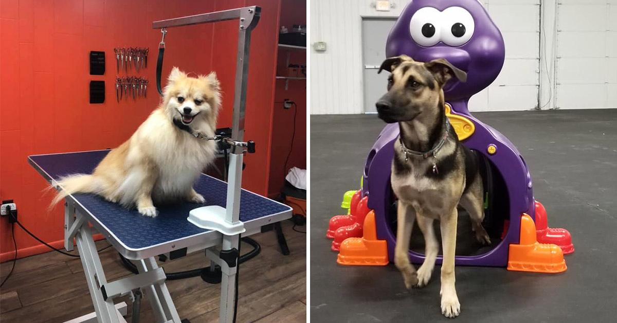 dog on a grooming table and dog running through a tunnel