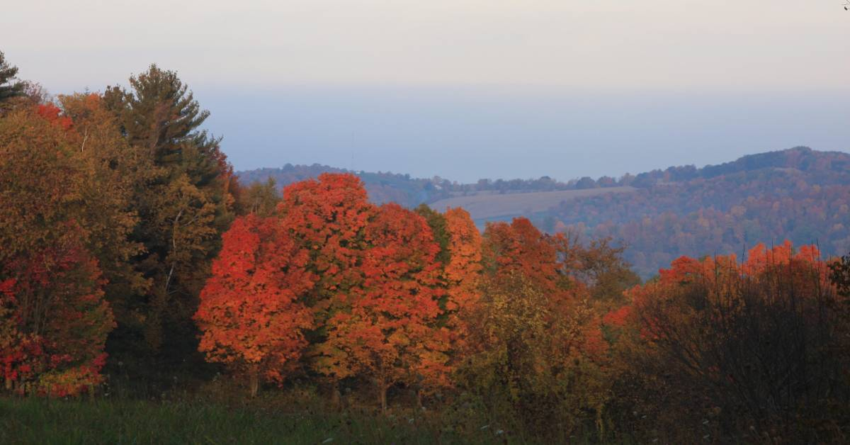red fall foliage on trees