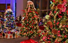 decorated christmas trees in a room