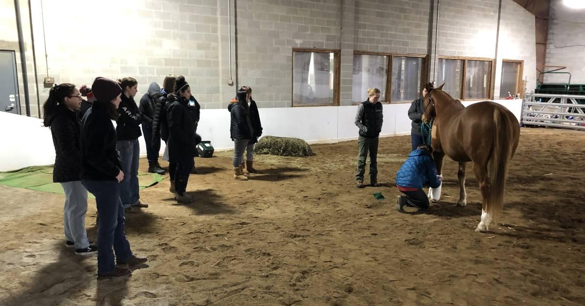 teens in a barn area near a horse