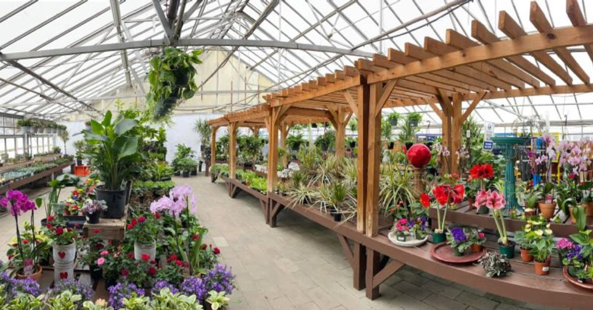 plants and flowers in a greenhouse