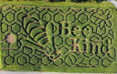 aerial view of bee themed corn maze