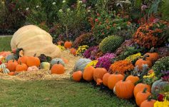 garden display of pumpkins and flowers