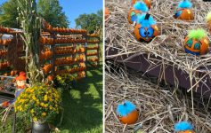 pumpkins and pumpkin displays